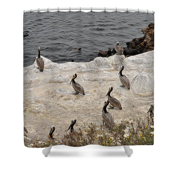 Pelicans Seals N Daisies  Shower Curtain