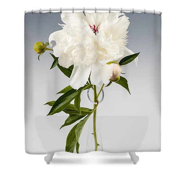 Peony Flower In Vase Shower Curtain