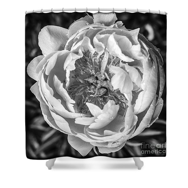 Peony Flower Square Format Shower Curtain