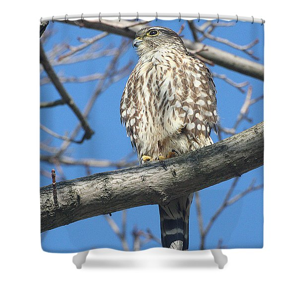 Perched Merlin Shower Curtain
