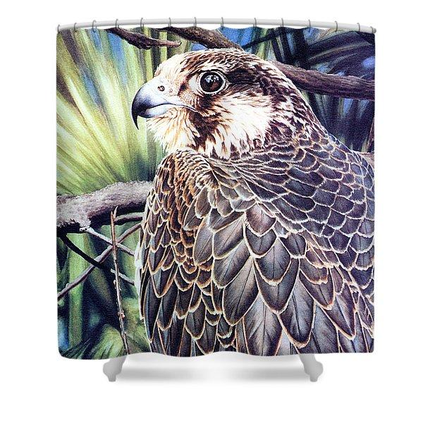 Da138 Peregrine Falcon By Daniel Adams Shower Curtain