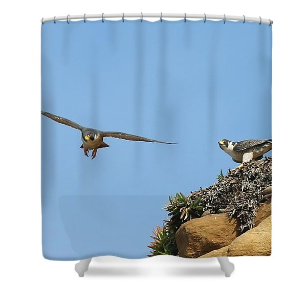 Peregrine Falcons - 1 Shower Curtain