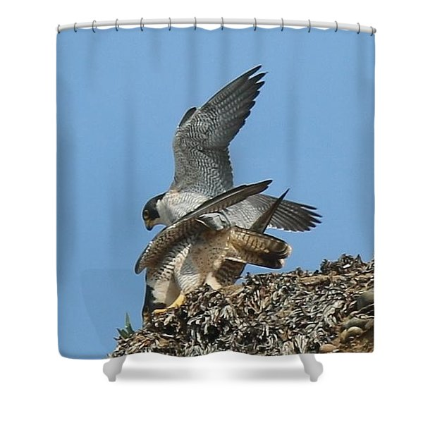 Peregrine Falcons - 4 Shower Curtain