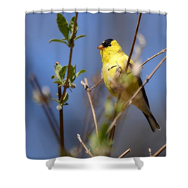 Perfect Shade Of Yellow Shower Curtain
