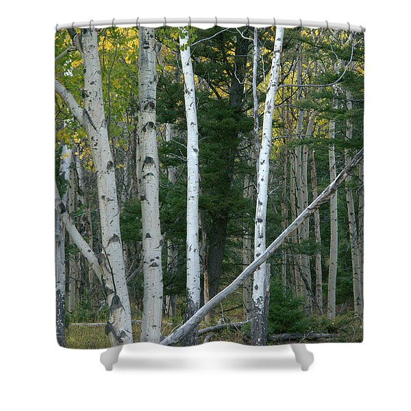 Perfection In Nature Shower Curtain