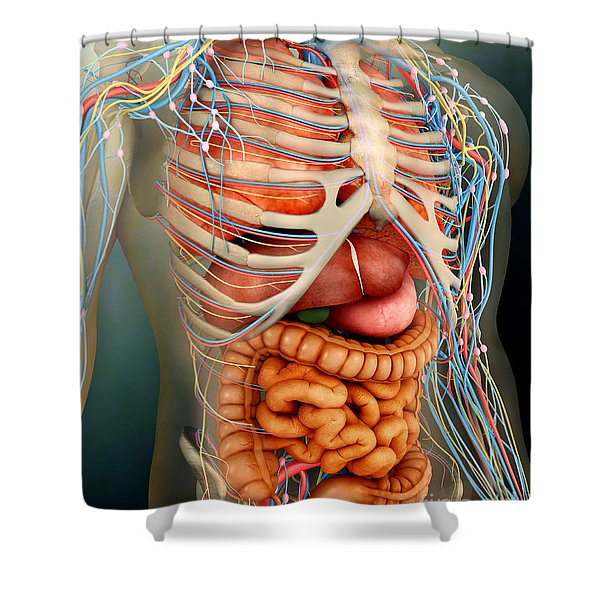 Perspective View Of Human Body, Whole Shower Curtain