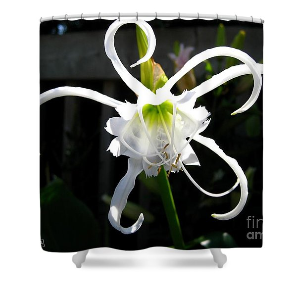 Peruvian Daffodil Named Advance Shower Curtain