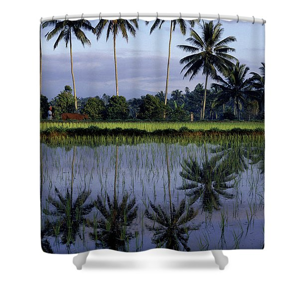 Philippine Rice Terraces Shower Curtain