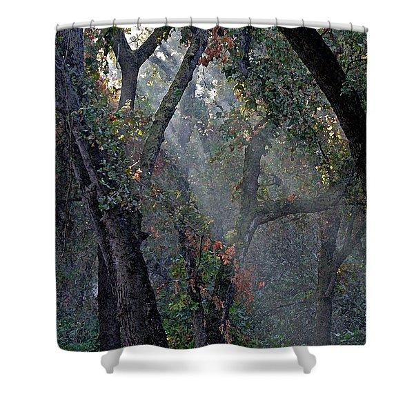 Phorest Lights Shower Curtain