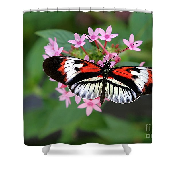 Piano Key Butterfly On Pink Penta Shower Curtain