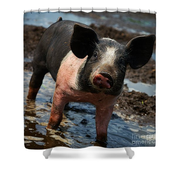 Pig In The Mud Shower Curtain