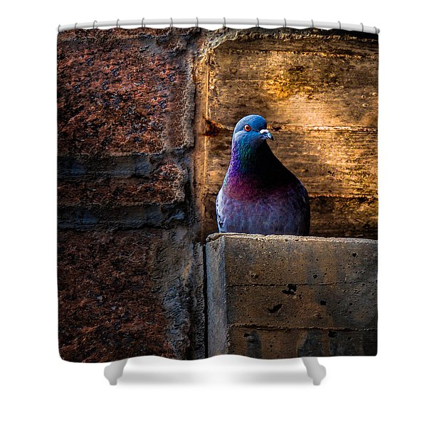 Pigeon Of The City Shower Curtain