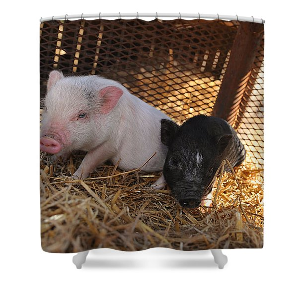 Piglets - Pigs - Barynard Animals And Petting Zoos Shower Curtain