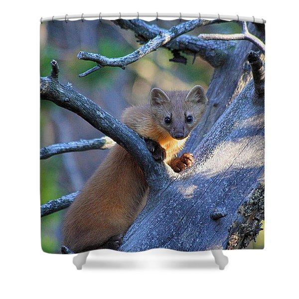 Pine Martin Shower Curtain