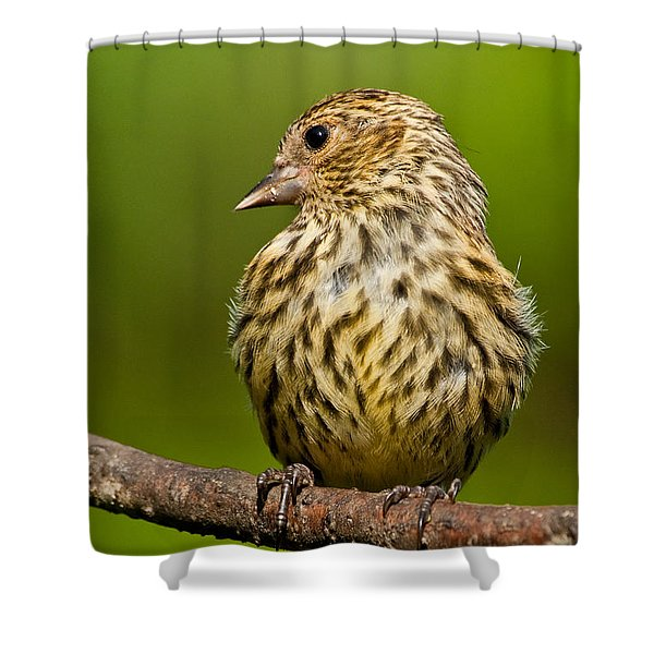 Pine Siskin With Yellow Coloration Shower Curtain