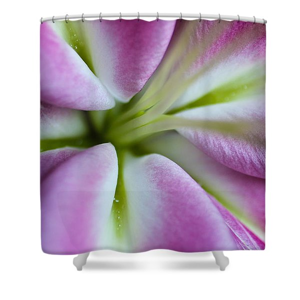 Pink Asiatic Lily Shower Curtain
