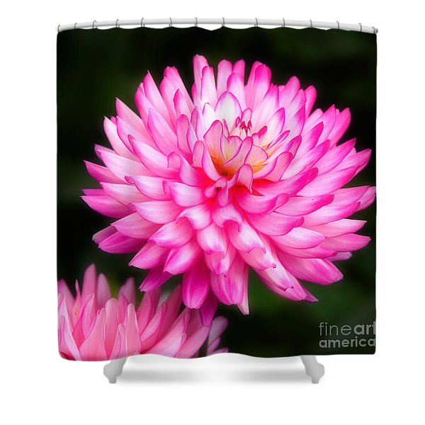 Pink Chrysanths Shower Curtain