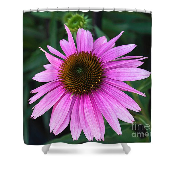 Pink Conehead Shower Curtain