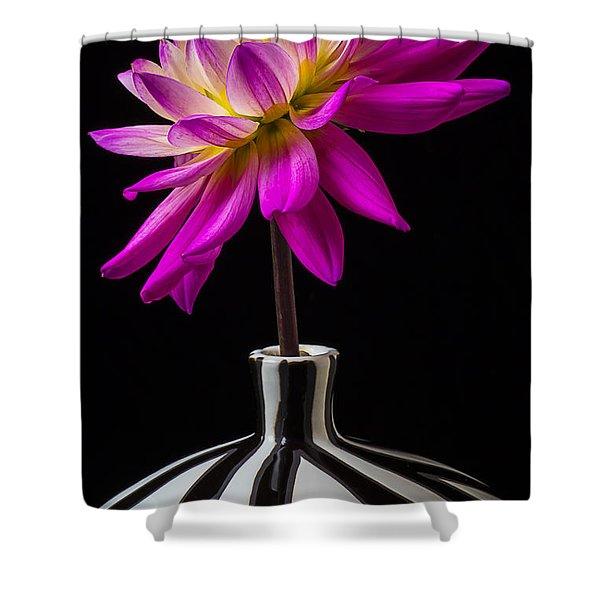 Pink Dahlia In Striped Vase Shower Curtain