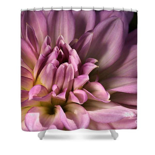 Pink Dahlia's Dream Shower Curtain