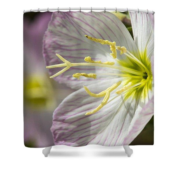 Pink Evening Primrose Flower Shower Curtain