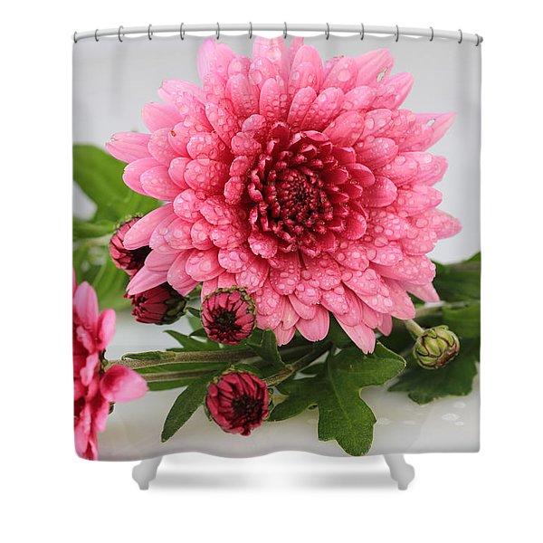 Pink Mums Shower Curtain