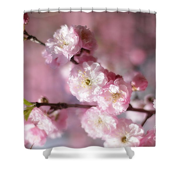 Pink Plum Branch 1 Shower Curtain