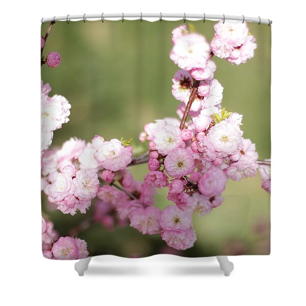 Pink Plum Branch On Green 2 Shower Curtain