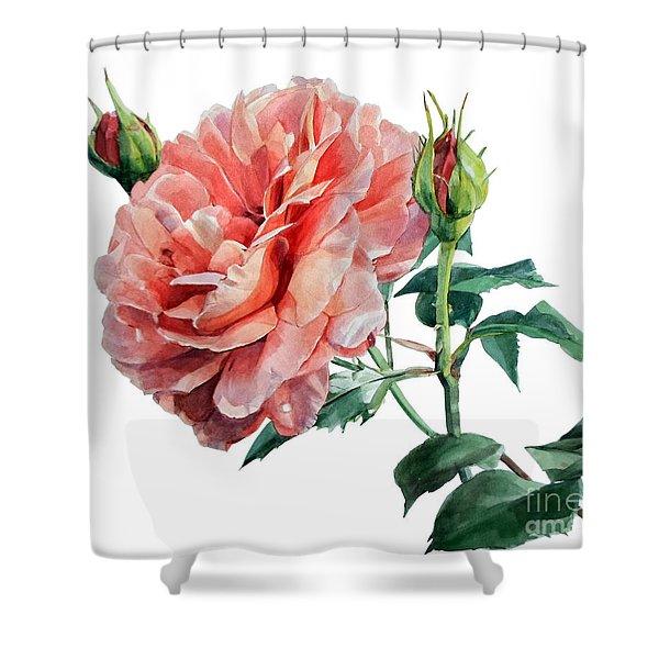 Pink Rose Odette  Shower Curtain