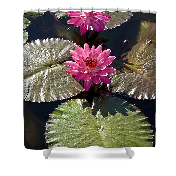 Pink Water Lily IIi Shower Curtain