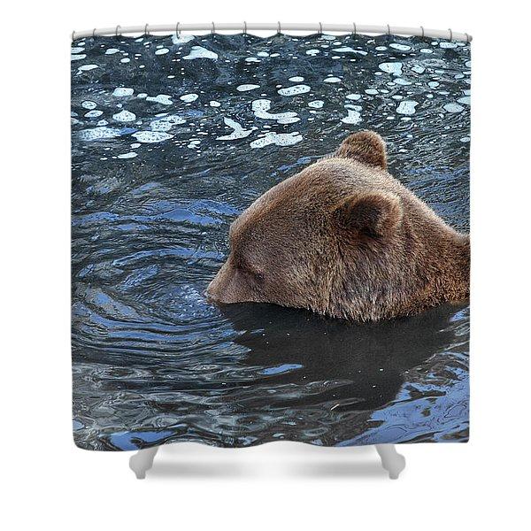 Playful Submerged Bear Shower Curtain
