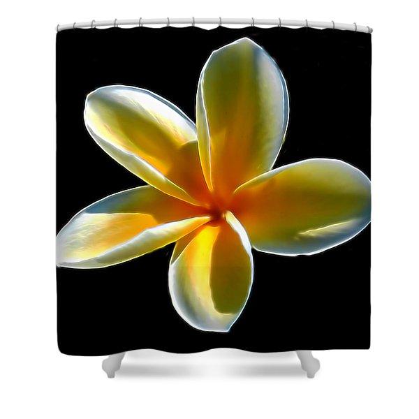 Plumeria Against Black Shower Curtain