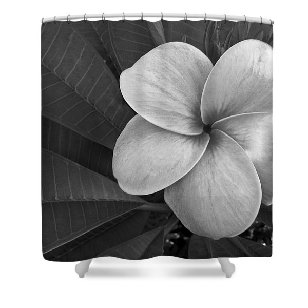Plumeria With Raindrops Shower Curtain