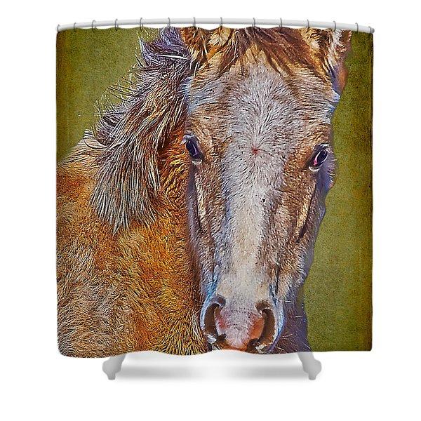 Pony Portrait  Shower Curtain