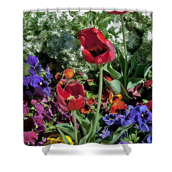 Shower Curtain featuring the photograph Poppies by Mae Wertz