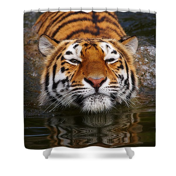 Portrait Of A Bathing Siberian Tiger Shower Curtain