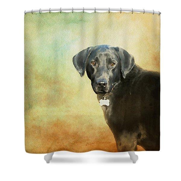 Portrait Of A Black Labrador Retriever Shower Curtain