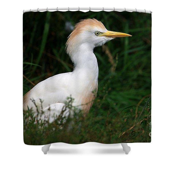 Portrait Of A White Egret Shower Curtain