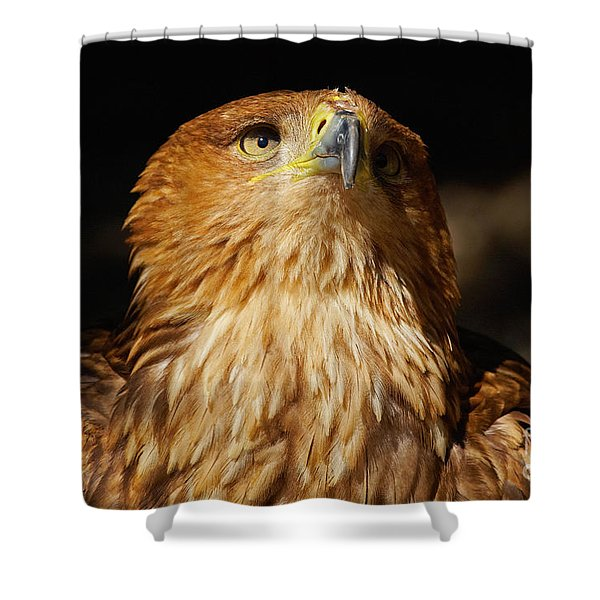 Portrait Of An Eastern Imperial Eagle Shower Curtain