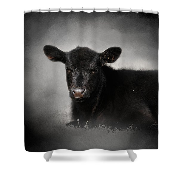 Portrait Of The Black Angus Calf Shower Curtain