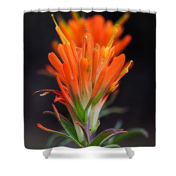Prairie Paintbrush Flower Shower Curtain