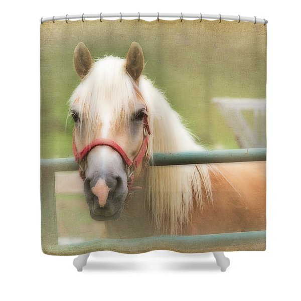Pretty Palomino Horse Photography Shower Curtain