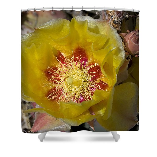 Prickly Pear Flower, Big Bend National Shower Curtain