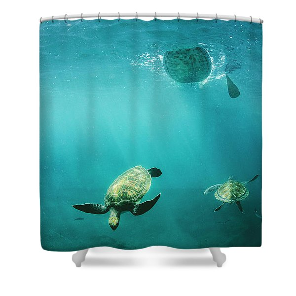 Pro Sup Athlete Paddles With The Turtles Shower Curtain