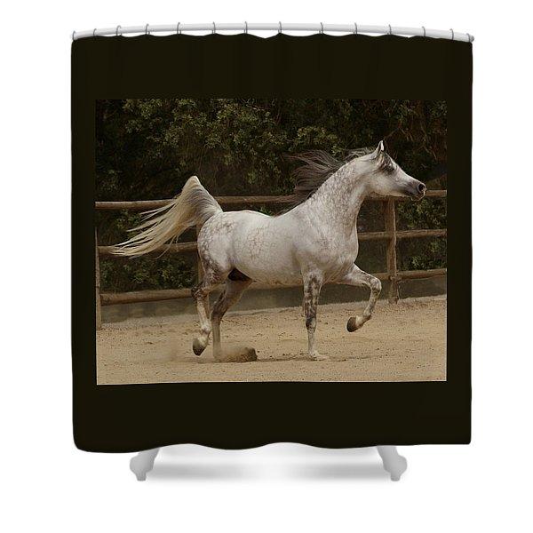 Shower Curtain featuring the photograph Proud Arabian by Melinda Hughes-Berland
