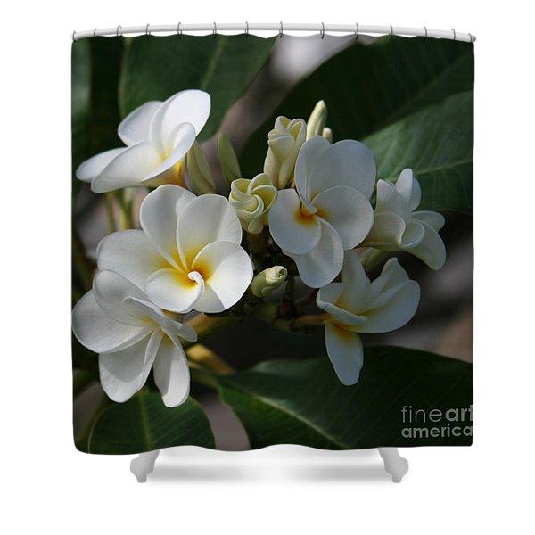 Pua Melia Na Puakea Onaona Tropical Plumeria Shower Curtain