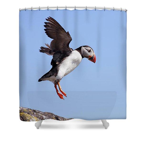 Puffin In Flight Shower Curtain