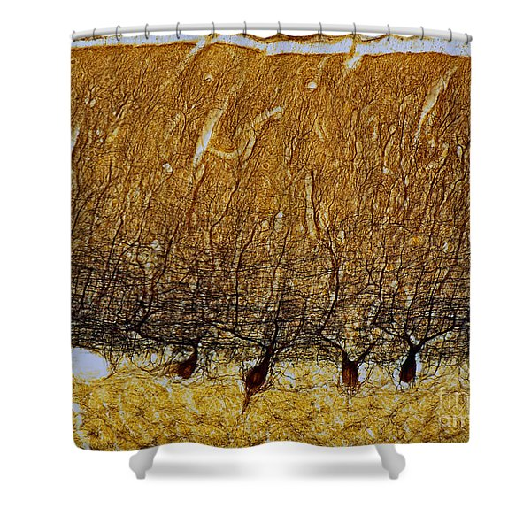 Pukinje Cells Lm Shower Curtain