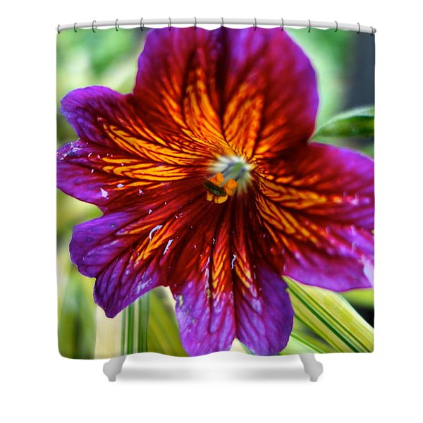 Purple And Orange Shower Curtain