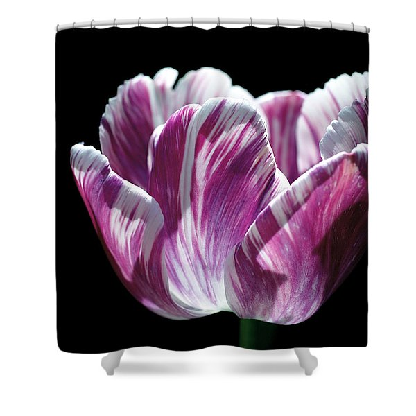 Purple And White Marbled Tulip Shower Curtain